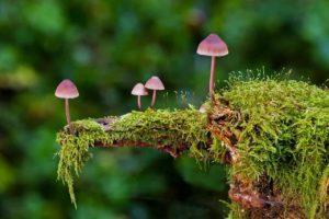 Moos und Pilze auf einem alten Baumstamm